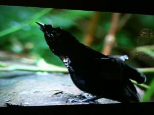 オバQ黒鳥